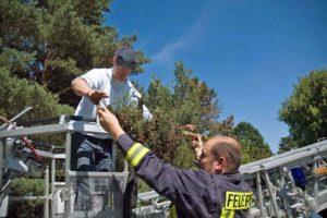 Bergung eines Bienenschwarms in Rheinbach mit Unterstützung der Feuerwehr