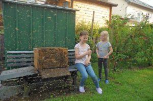 Im Garten der Familie Dresen in Lannesdorf war ein Bienenschwarm gelandet und zog alsbald in einen mitgebrachten Bienenkasten ein. Und die Kinder aus der Nachbarschaft genossen das seltene Schauspiel. (Foto: Honighäuschen)