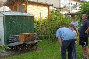Bienenschwarm in Lannesdorf (Foto: Honighäuschen)