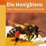 Die Honigbiene | Honighäuschen