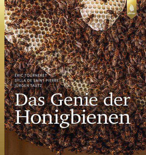 Das Genie der Honigbienen | Honighäuschen