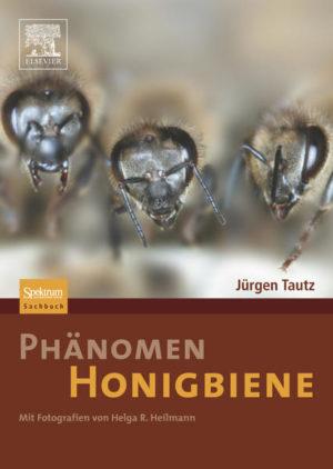 Phänomen Honigbiene | Honighäuschen