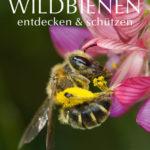 Honighäuschen (Bonn) - Das kompetente Praxisbuch mit ausgezeichneten Fotos - wissenschaftlich fundiert. Die verschiedenen Familien der Wildbienen: Unterscheidung