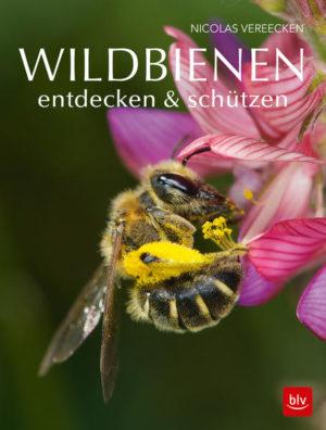 Wildbienen entdecken & schützen | Honighäuschen