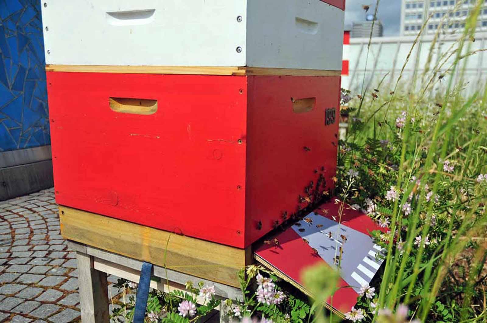 Die Bundesbienen der Imkerei Honighäuschen auf dem Dachgarten der Bundeskunsthalle (Foto: Klaus Maresch)