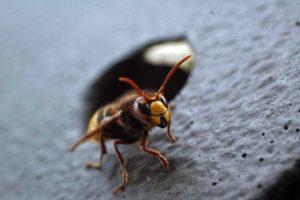 Echt jetzt? Das soll ein Insektenschutzpaket sein? (Foto: Klaus Maresch)