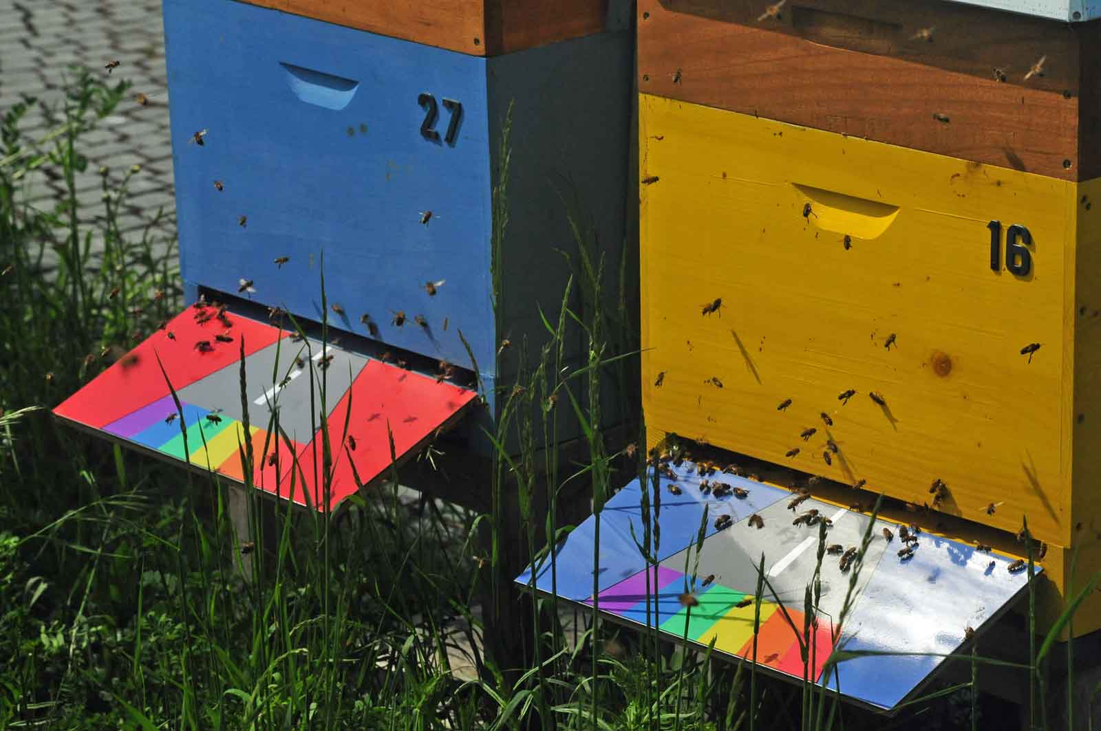 Die Bienenvölker auf dem Dachgarten der Bundeskunsthalle in Bonn haben Anflugbretter mit der Regenbogenflagge, dem Symbol der Gay Community.